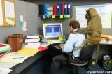 El hombre de negocios y los monos(traducción)